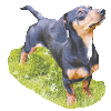 Lessons from a sausage dog (Part 10)