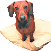 Lessons from a sausage dog (Part 2)