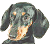 Lessons from a sausage dog (Part 11)