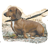 Lessons from a sausage dog (Part 15)
