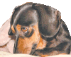 Lessons from a sausage dog (Part 12)